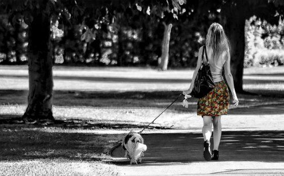 犬と一緒に通勤する女性