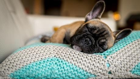 sleeping dog2