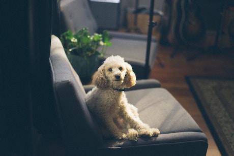 a dog on the sofa