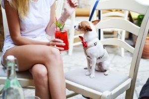 dog in party