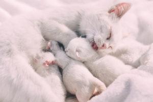parent cat