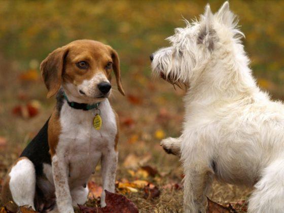 コミュニケーションする犬たち