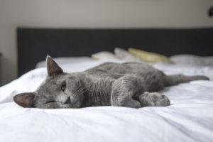 cat ill