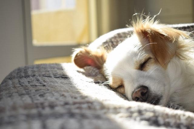 ポカポカの陽の中で眠る犬
