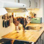猫がストレスによってキッチンで何かをしている