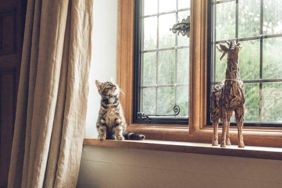 部屋の隅に隠れる猫