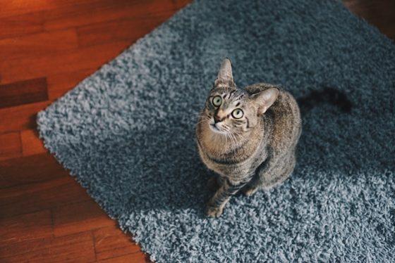 cat-looking