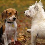 犬同士が会話する光景