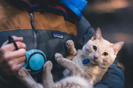 抱っこされてる猫