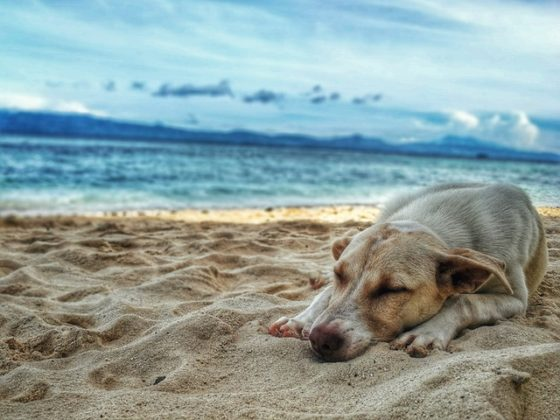 砂浜で眠る犬