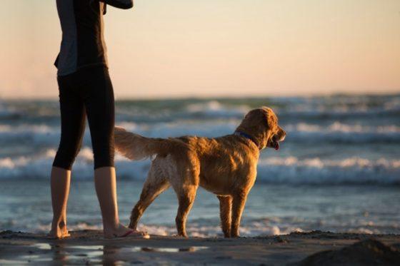 朝方、犬と海