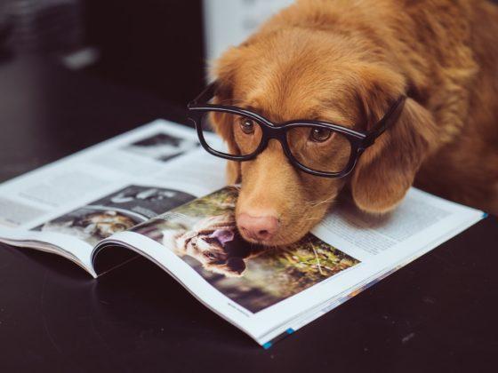 眼鏡をかけるいぬ