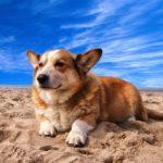 砂漠の中の犬