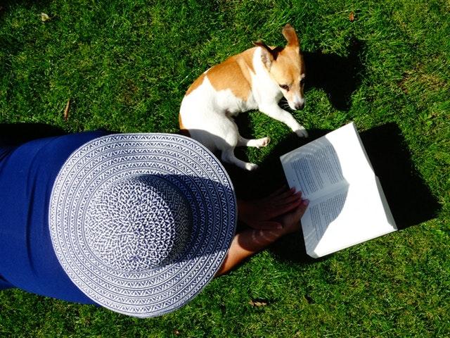 犬と草原の上