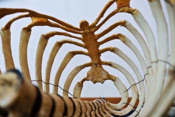 骨格イメージ