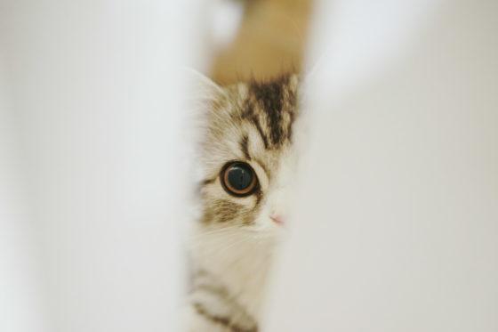 隙間から覗く猫