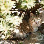 木陰に佇みこちらを見つめる猫