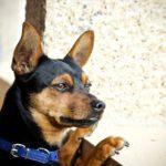 犬のボディランゲージ