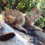 木陰で寝そべる猫