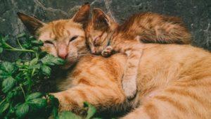 cat parents