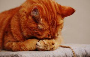 cat first term