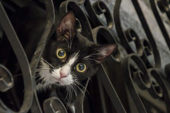 瞳孔が開いて興味津々な猫