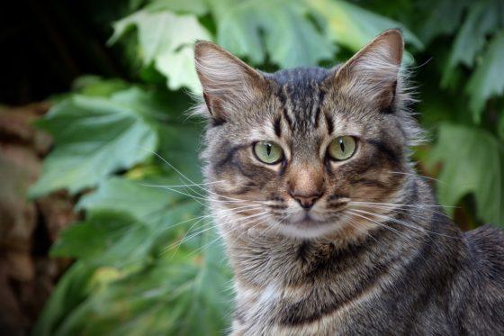 屋外、まっすぐこちらを見つめる猫