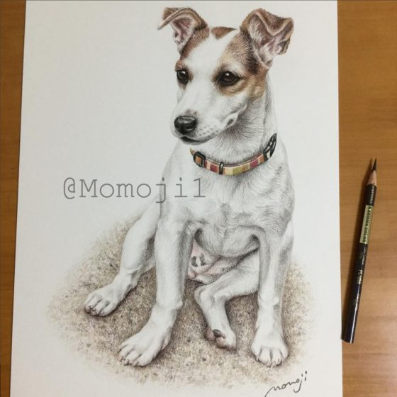 momojisan_dogportrait9
