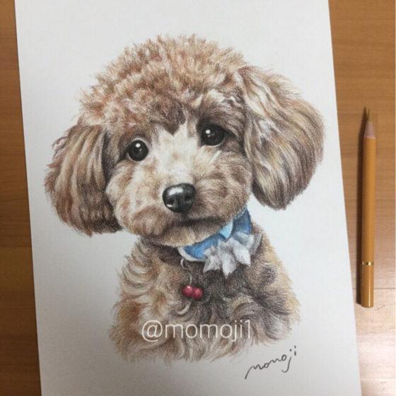 momojisan_dogportrait14