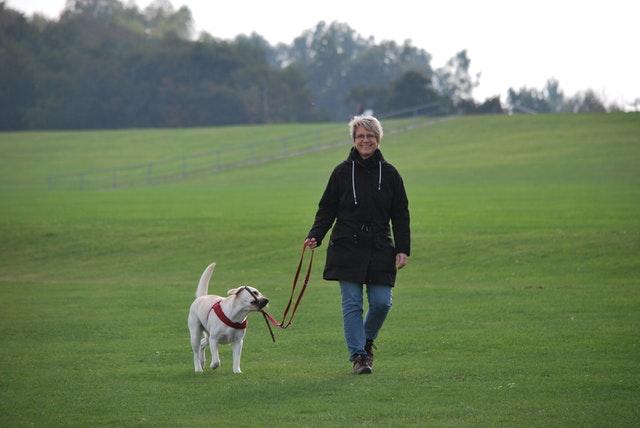 おばさまと犬