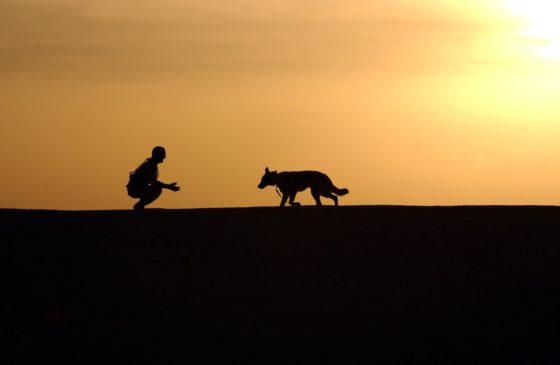 夕焼けの中の犬と人