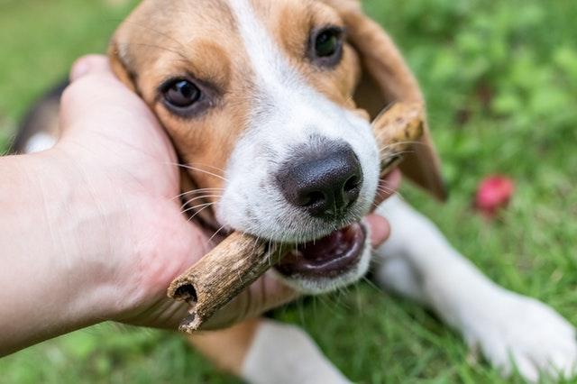 棒を加える犬