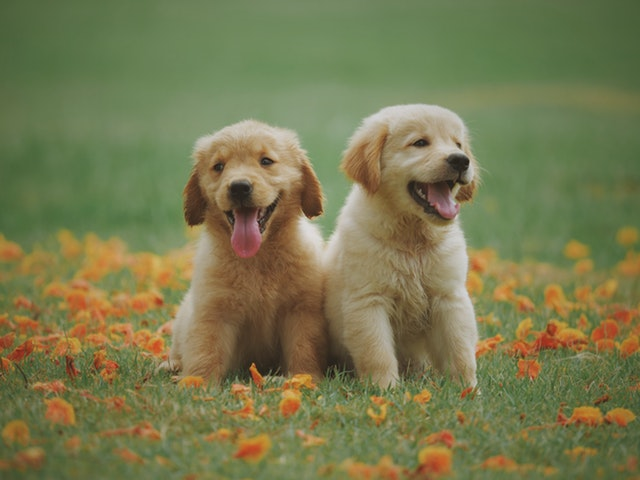 お花と2匹の犬