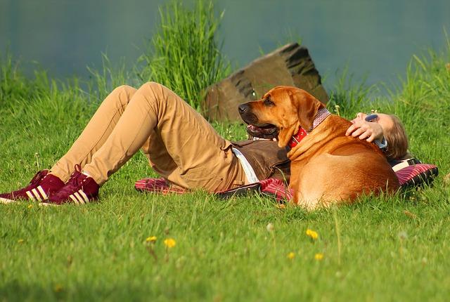 寝転ぶ女の子と犬