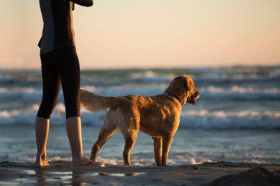 海を見つめる犬と人