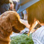 女性によしよしされる犬