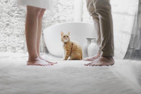 男女の間でたたずむ猫
