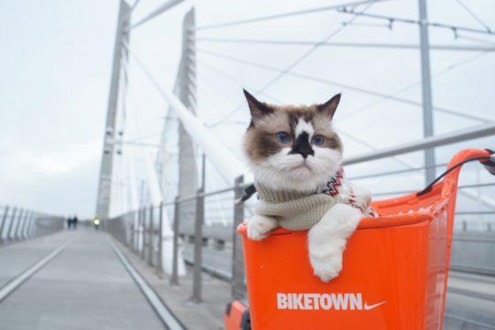 自転車カゴに乗せられる猫