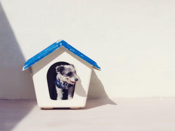 ハウスの中の犬
