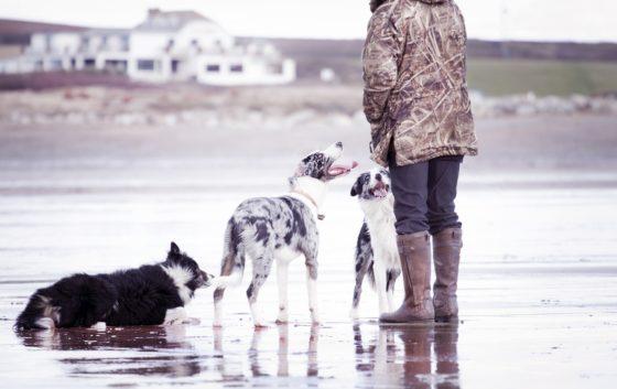 3匹の犬を連れた人