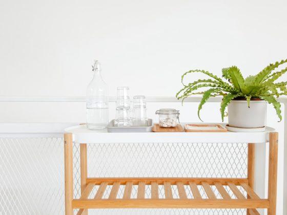 食器と多肉植物