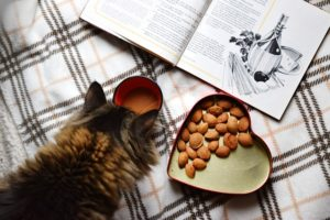 猫のごはんを手づくりするときに気をつけること
