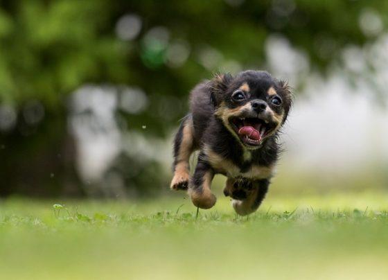 とびはねる犬