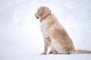 雪の中で背を向ける犬