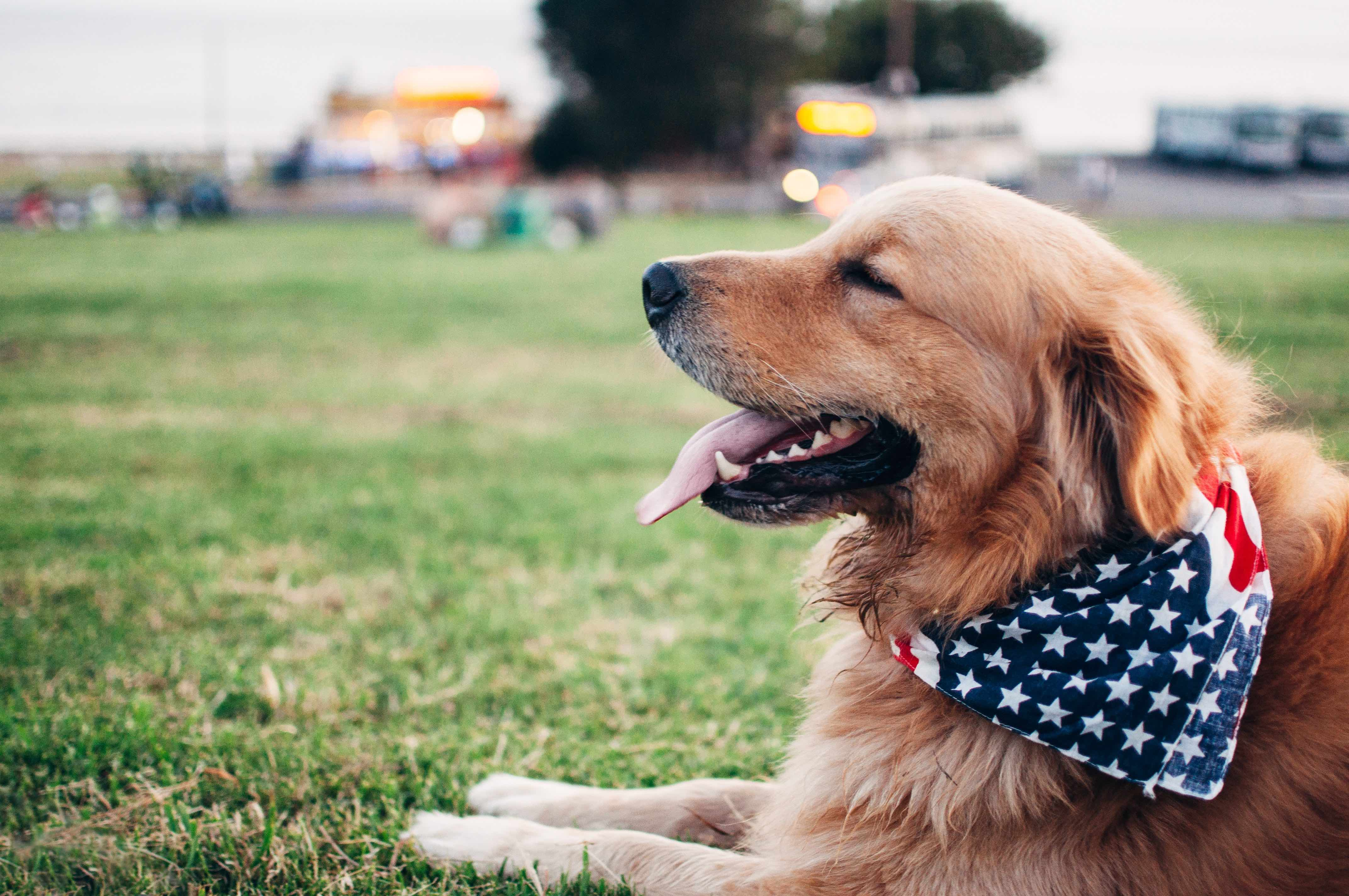 ペンション 犬