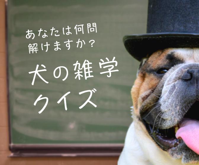 全問解けたら犬博士!?あなたは何問解けますか?犬の雑学クイズ