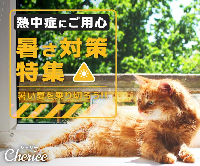 【熱中症予防】この暑い夏を乗り切ろう!暑さ対策特集