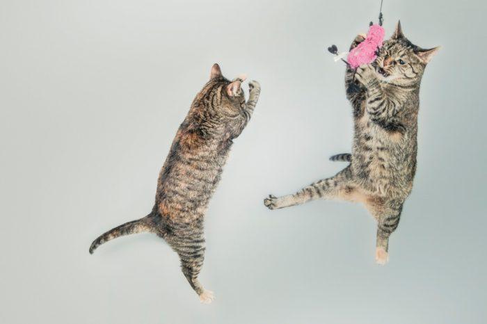 二匹の猫たち
