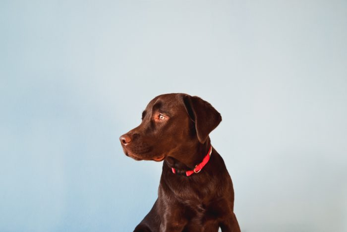 犬 ウェアラブルデバイス