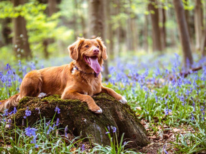犬の記念日